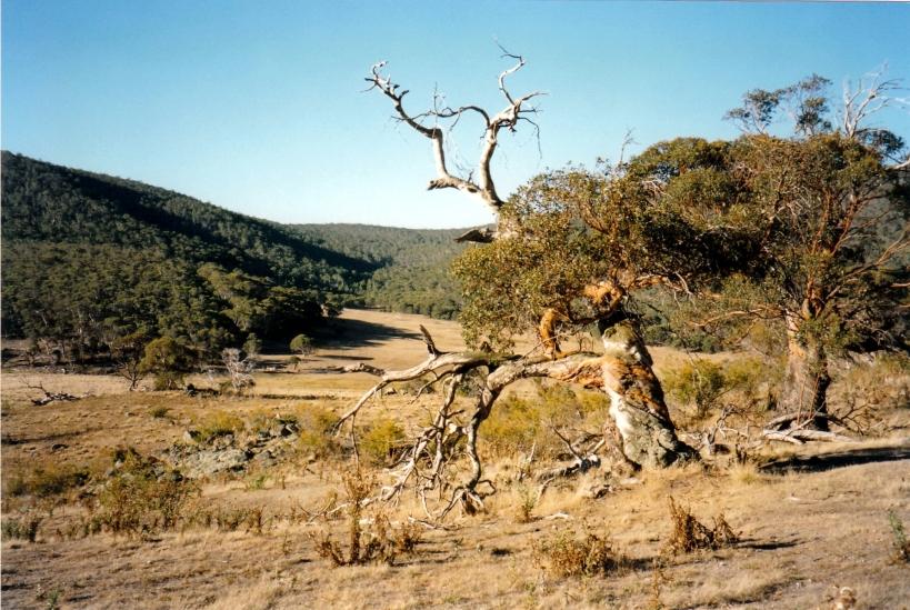 03-19-1998-02-naas-ck-valley-namadgi-np