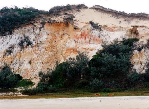05-11-1998 09 dingoes near Maheno wreck.jpg