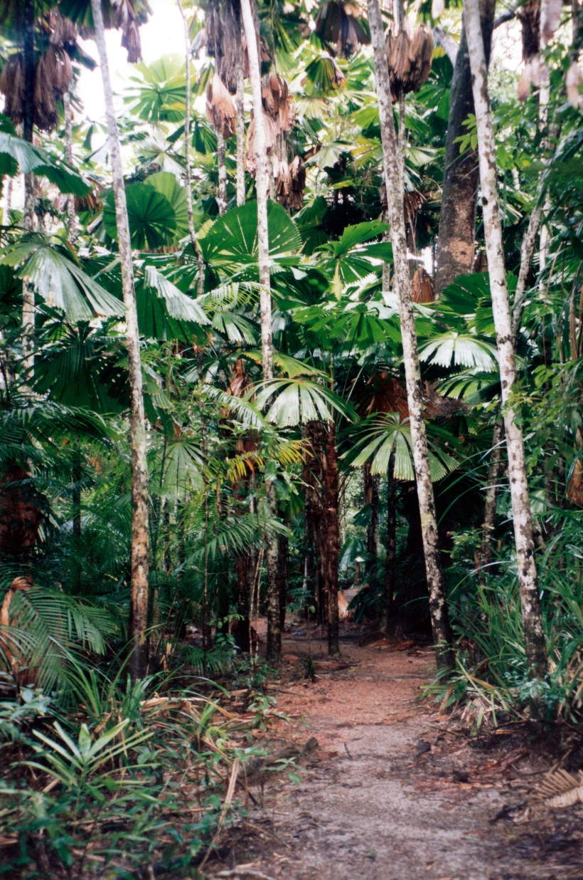 05-30-1998 02 Licuala Palms walk track Mission Beach.jpg