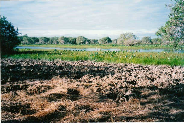 07-12-1998-05-feral-pig-damage