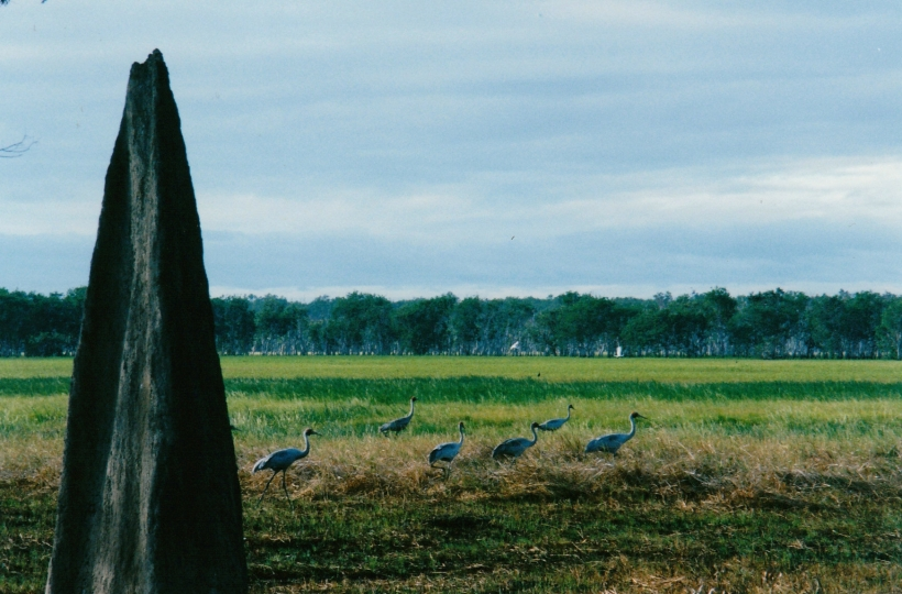 07-12-1998 06 brolgas and cranes.jpg