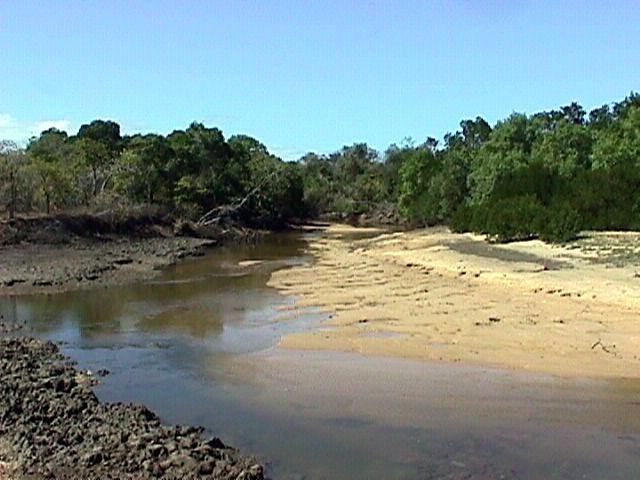 07-17-1998 02 Silver Plains Tidal Creek.jpg