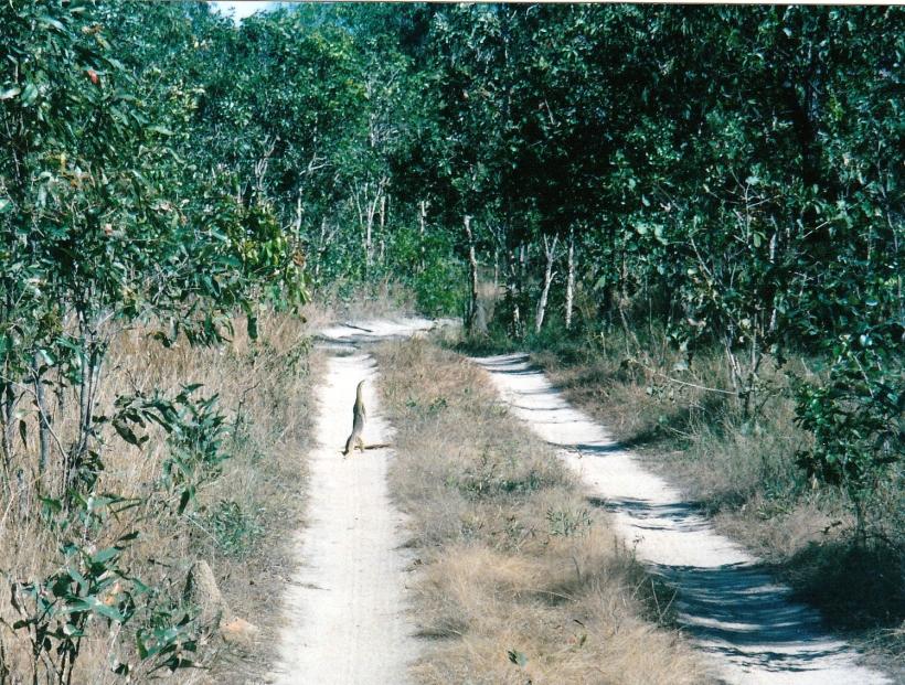 07-18-1998  goanna silver plains.jpg