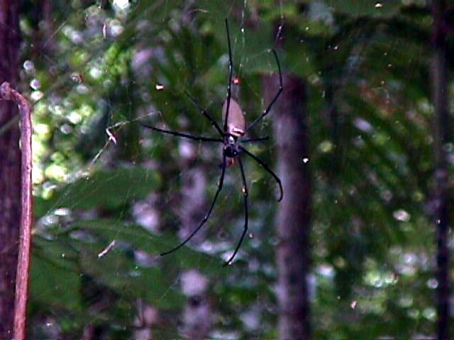 08-05-1998-02-large-spider