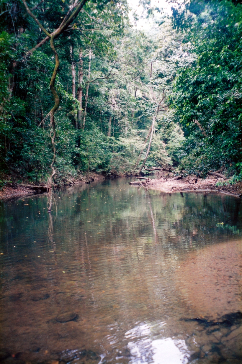 08-22-1998 01 rainforest Iron Range NP.jpg