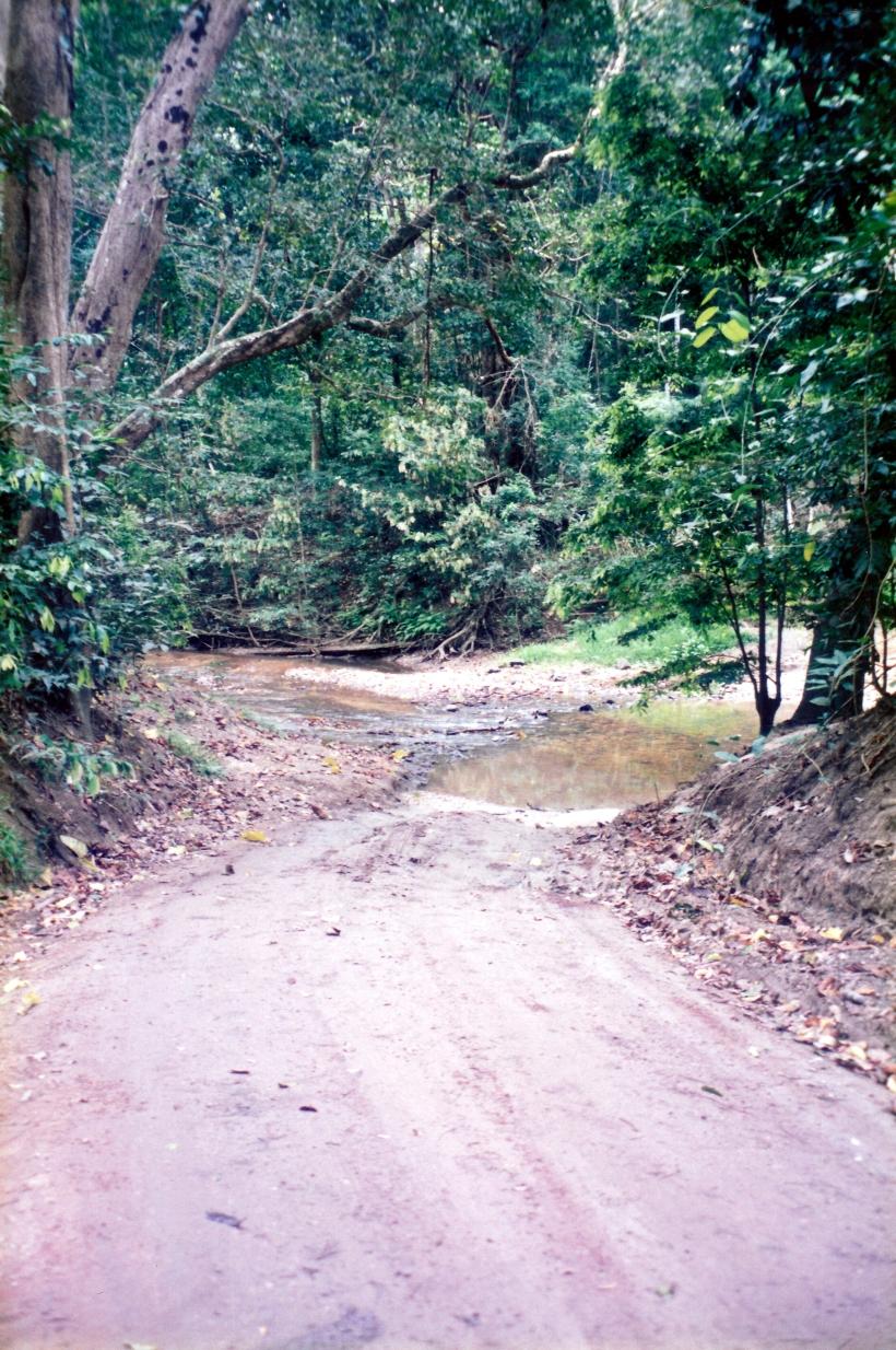 08-22-1998 02 trk Iron Range NP.jpg
