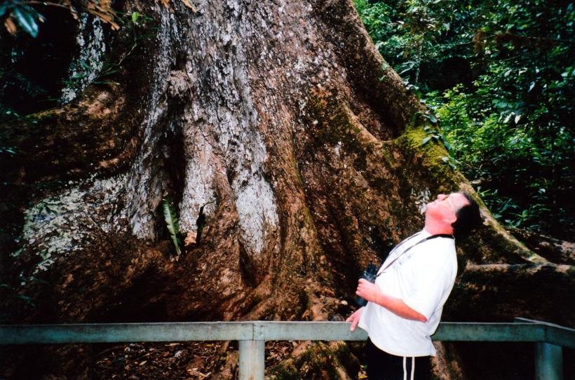 11-06-1998-03-inspecting-base-of-old-red-cedar-tree-near-lake-eacham