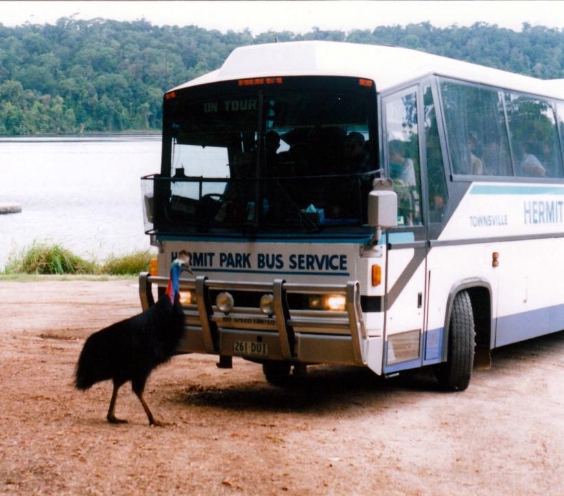 11-11-1998 02 lake barrine cassowary.jpg