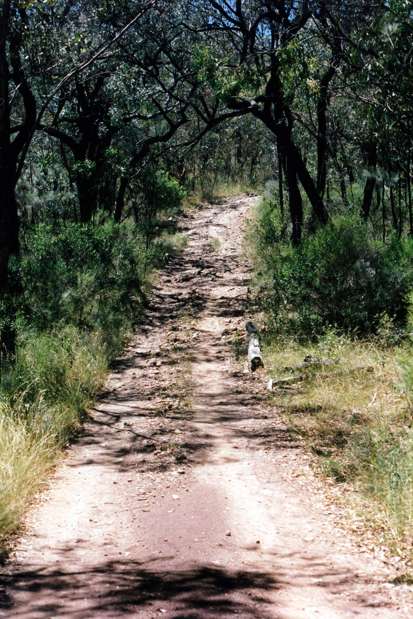 01-19-1999 track in Sundown NP.jpg