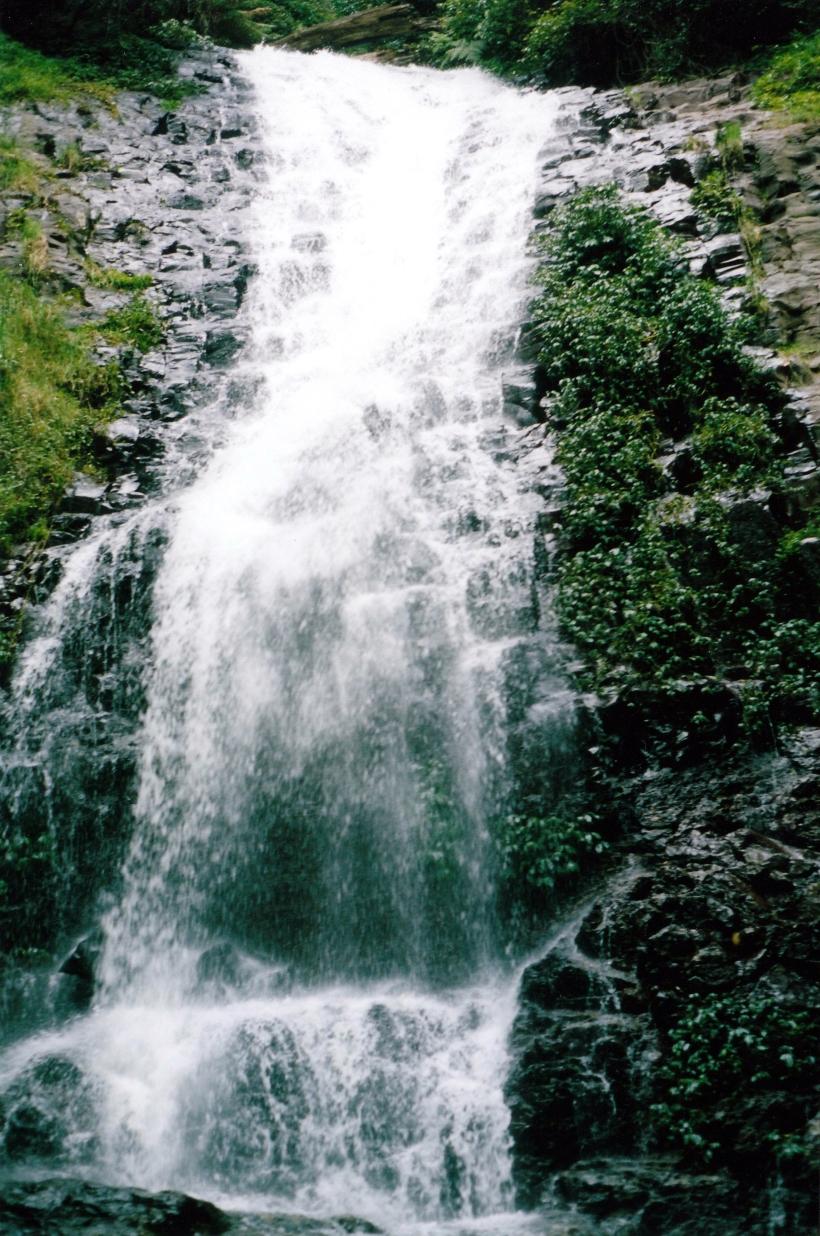 02-18-1999-dorrigo-np-tristania-falls