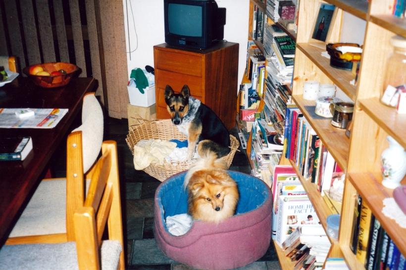 04-04-1999 Butch & Fox ready for supper.jpg