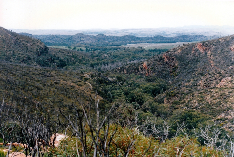 05-06-1999 Wilpena from Wangarra LO 92 pic to show.jpg