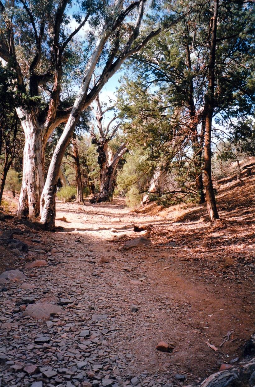 05-07-1999 06 Sacred canyon track.jpg