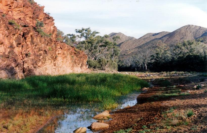 05-13-1999 07 permenent waterhole Wilkawillina Gorge.jpg