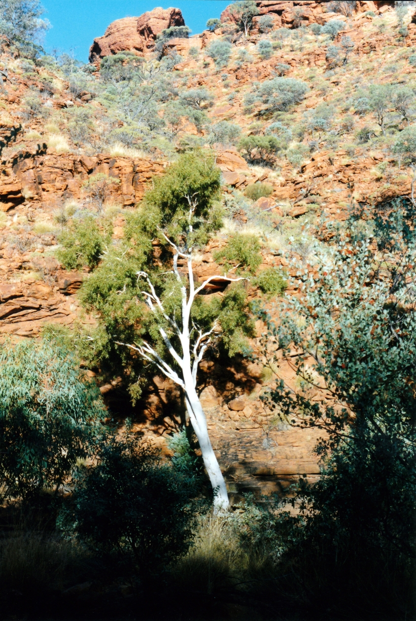 06-09-1999 01 late pm in Kings Canyon