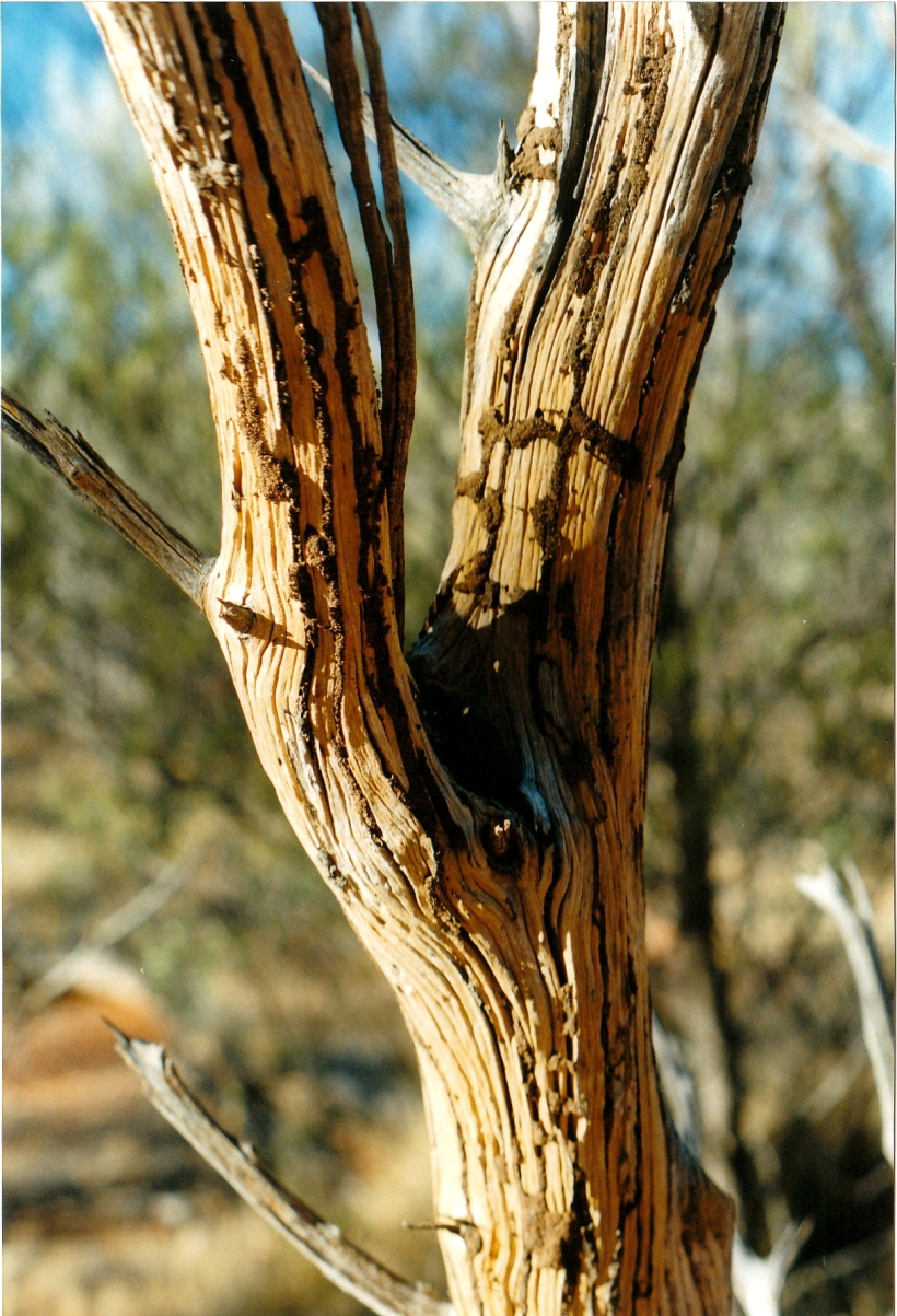 06-23-1999 12 termite patterns.jpg