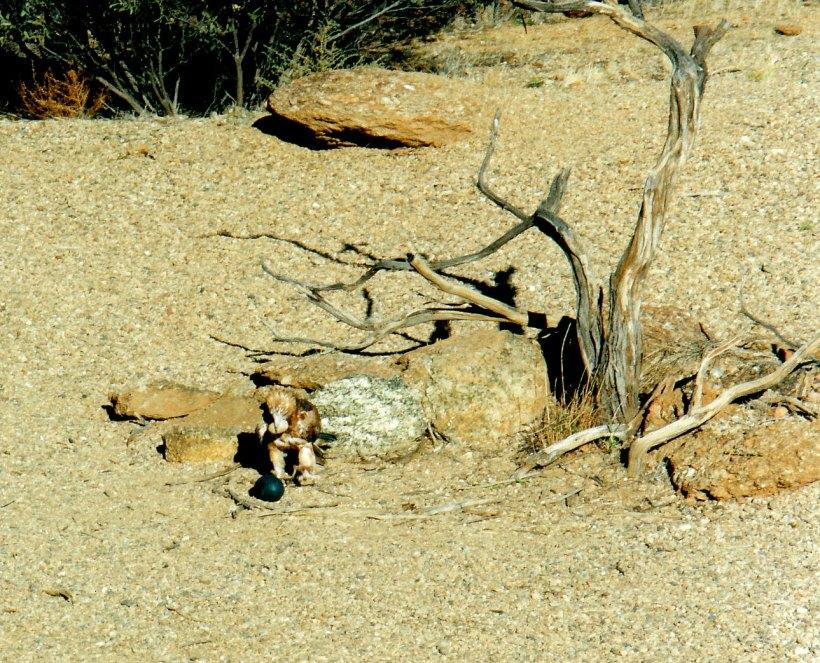 06-29-1999 buzzard