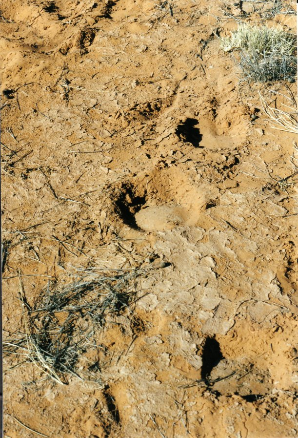 06-30-1999 06 camel tracks big