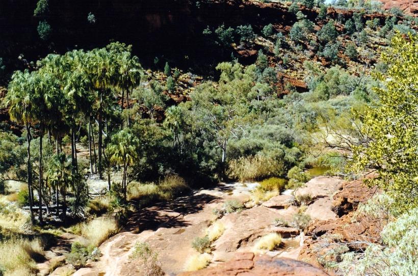 08-08-1999 09 palm valley from rim.jpg