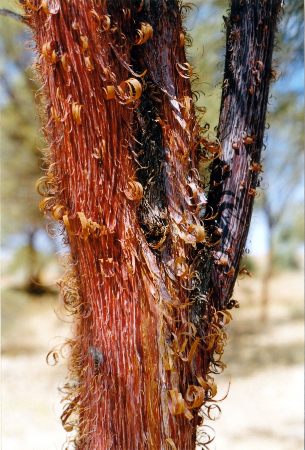 08-14-1999 06  red mulga.jpg
