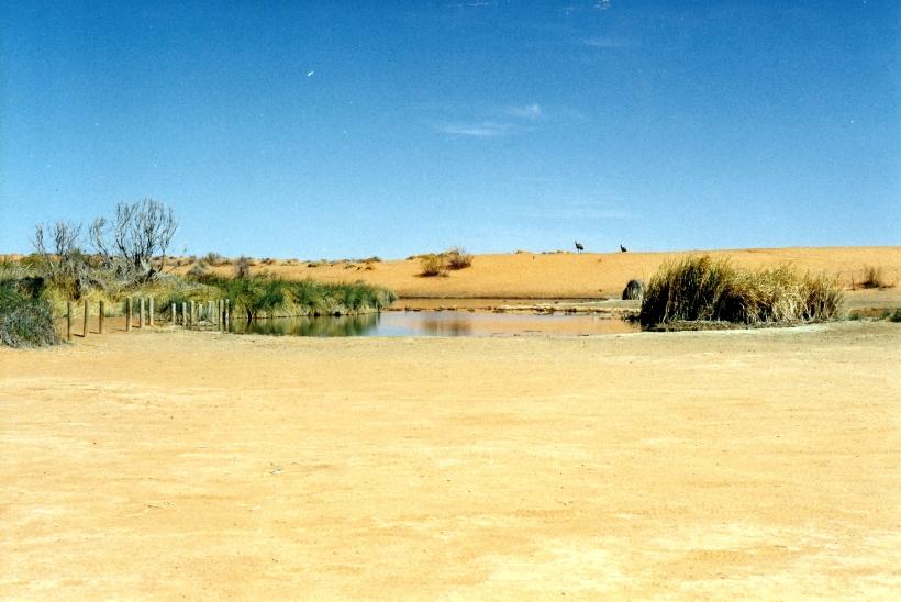 08-15-1999 09 Purni Bore & emus