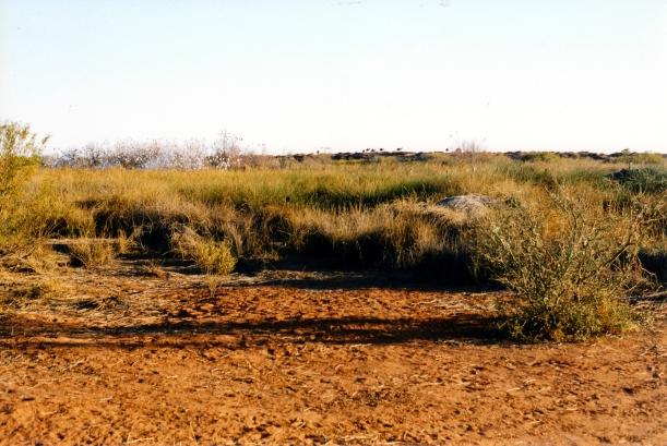 08-15-1999 16   camels Purni Bore.jpg