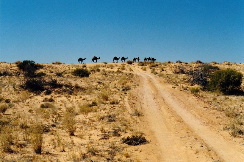 08-17-1999 13 rig rd camels