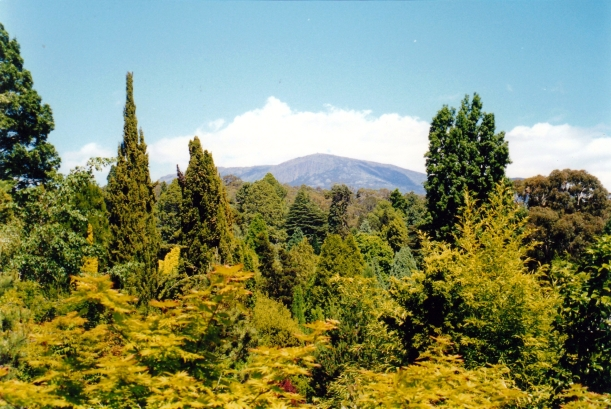 11-18-1999 mt wellington from bot gardens.jpg