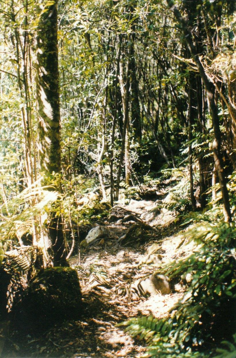 01-02-2000 myrtle gully tk walk