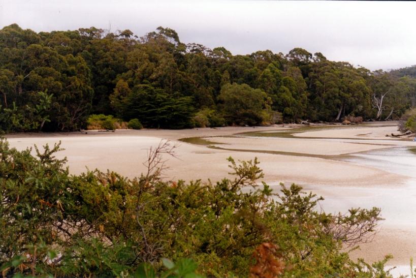 01-31-2000 01  Cockle Creek at low tide.jpg