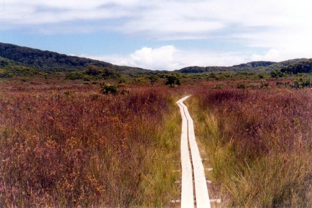 01-31-2000 04 great sth walk tk.jpg
