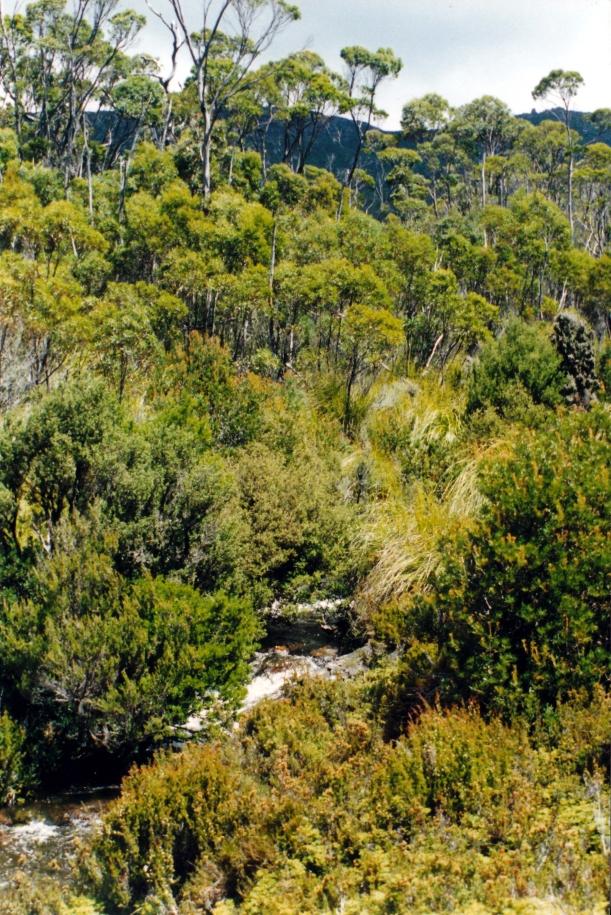 02-05-2000 headwaters Arve R.jpg