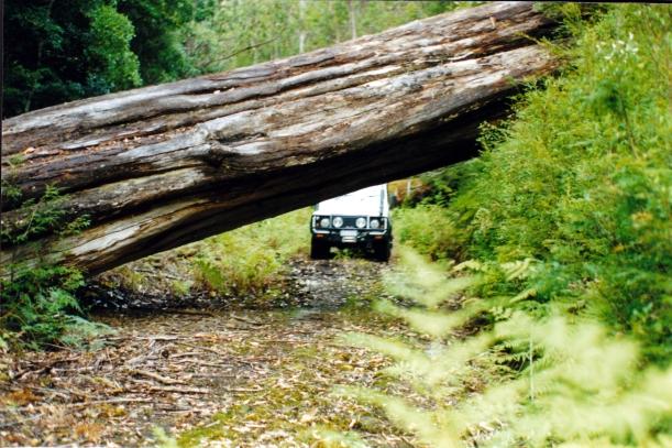 02-05-2000 Tahune Forests track blocked.jpg