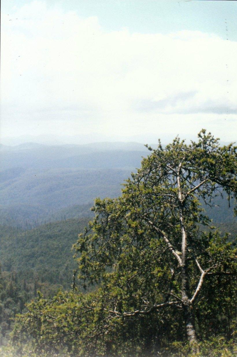 02-05-2000 waratah lookout
