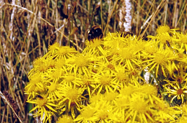 02-10-2000 big bumble bee.jpg