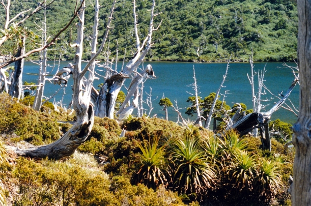 02-17-2000 30 tarn shelf pandanus