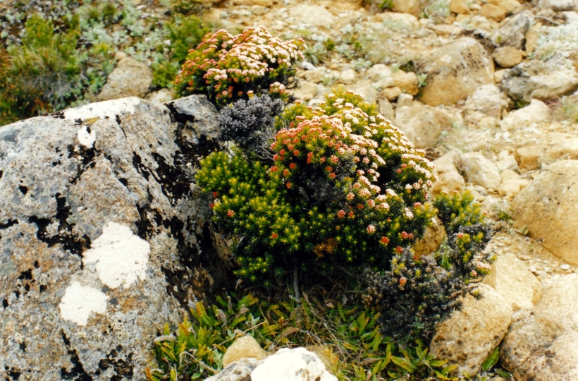 12-24-1999 mt w wildflowers.jpg
