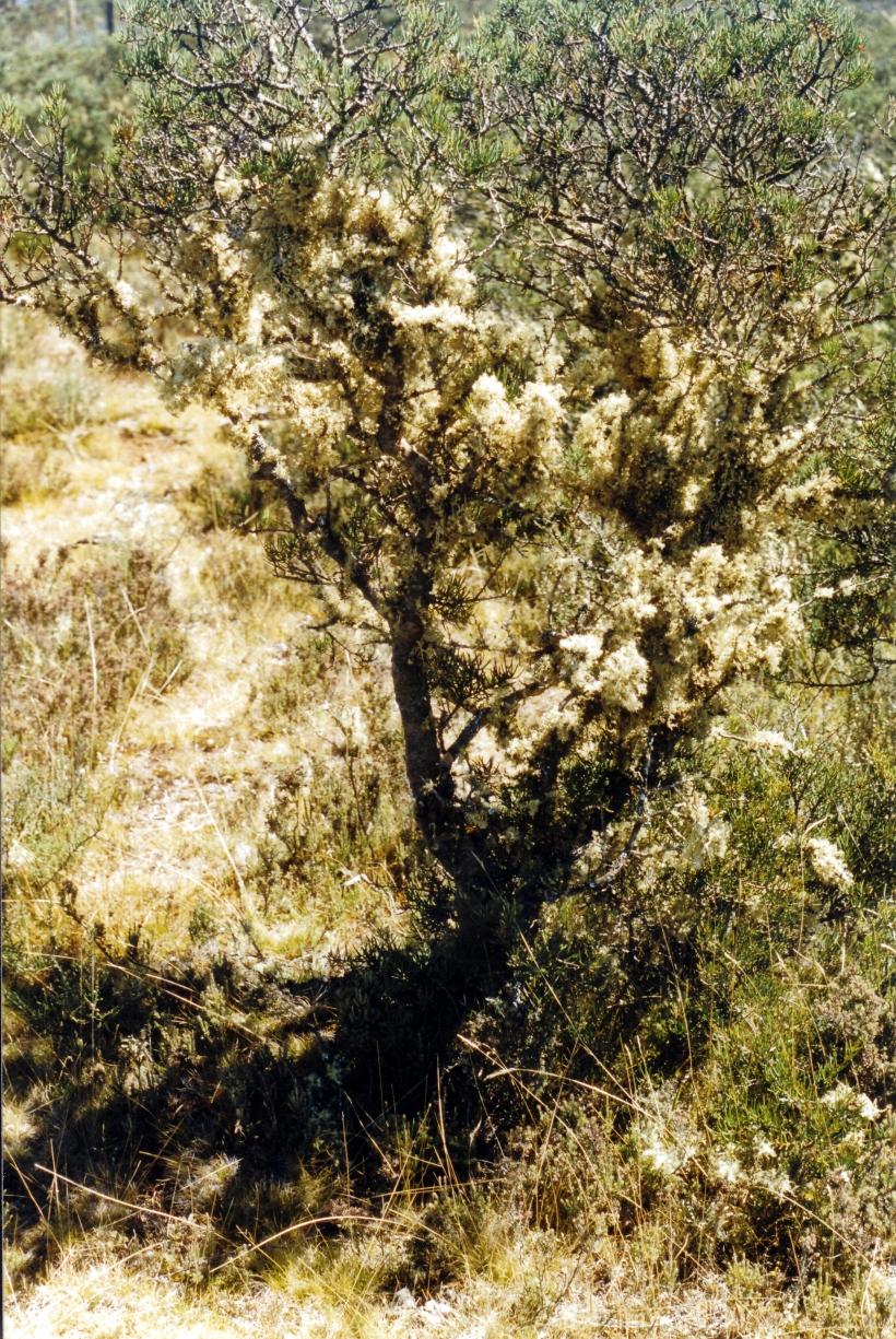 02-21-2000 lichen Lake St Clair.jpg