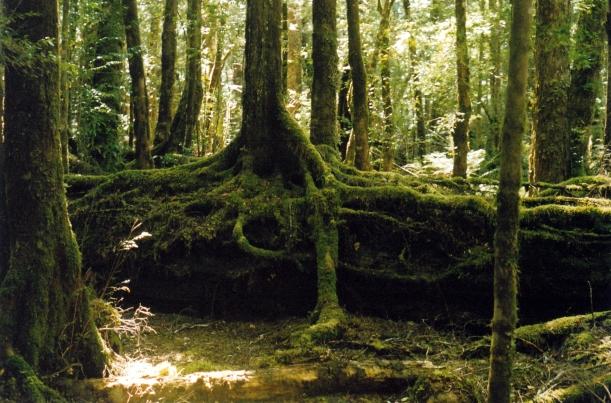 02-24-2000 franklin r rainforest.jpg