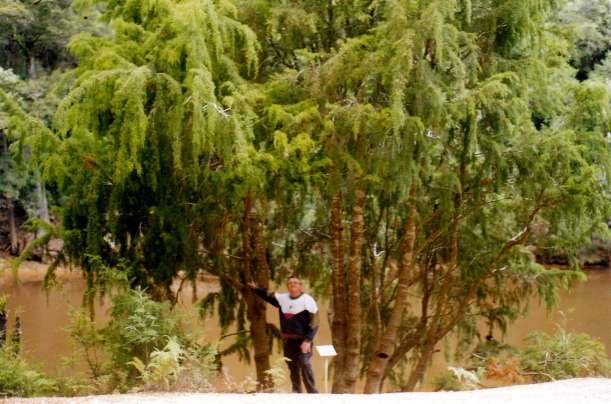 02-27-2000 huon pine king r.jpg