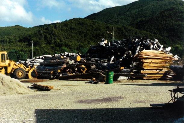 03-03-2000 huon pine stacks.jpg