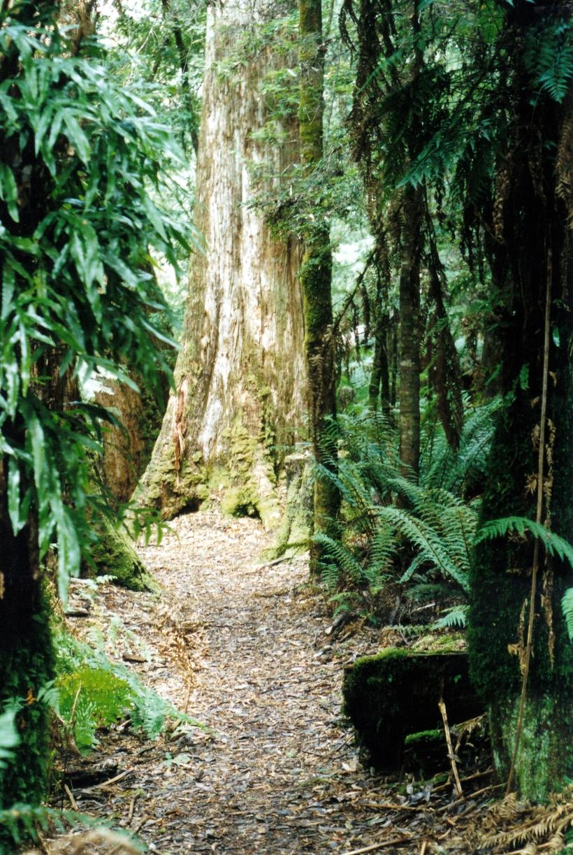 03-19-2000 03 forest Milkshake Hills walk.jpg