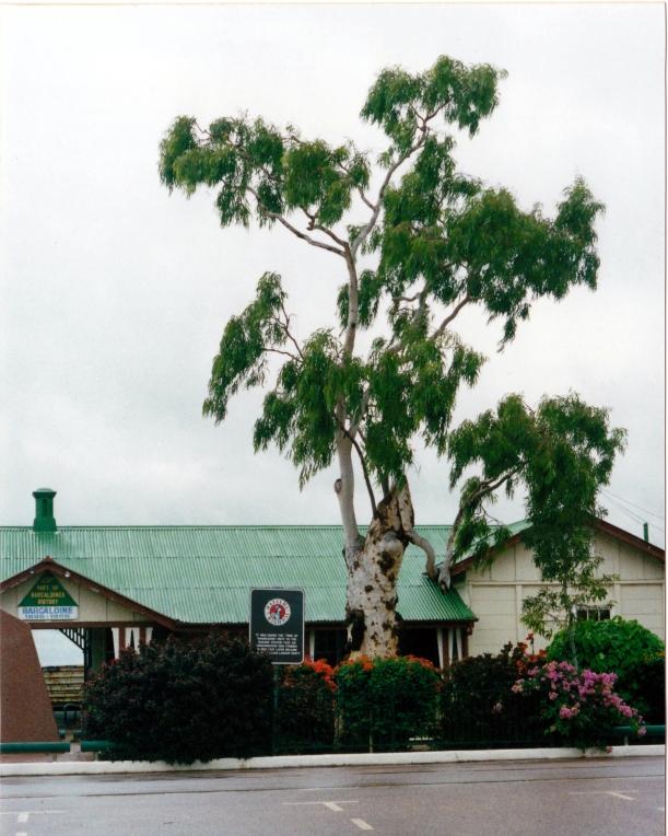 05-19-2000 tree knowledge.jpg