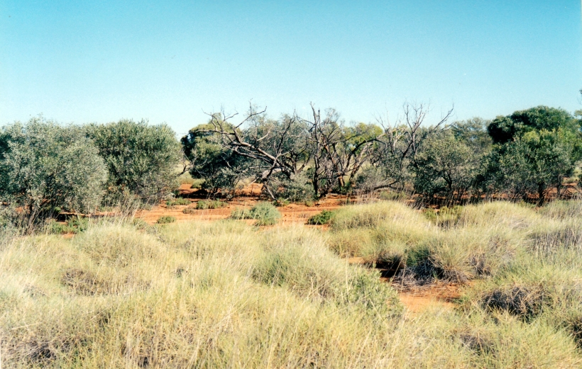 05-30-2000 mulga country opalton.jpg