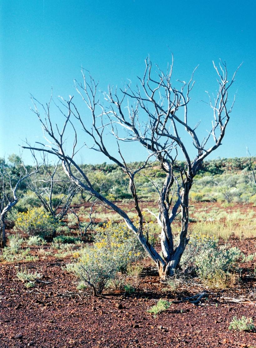 06-02-2000 dead tree