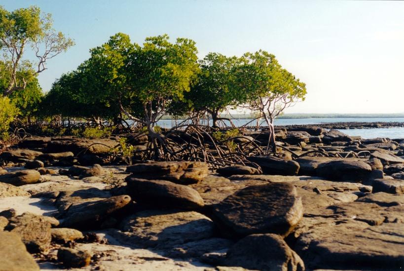 08-02-2000 pago mangroves.jpg