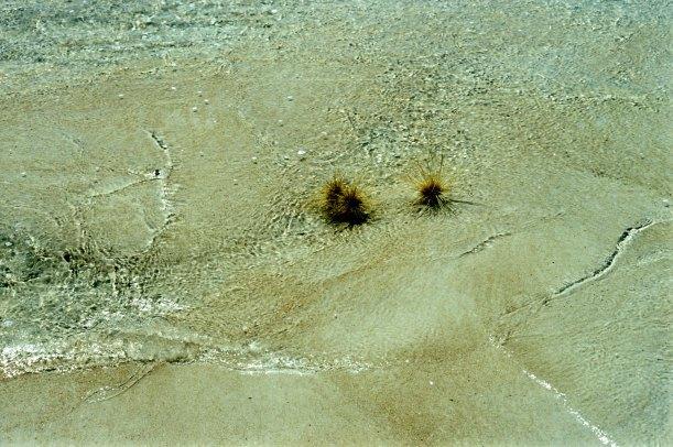 09-07-2000 beach art.jpg