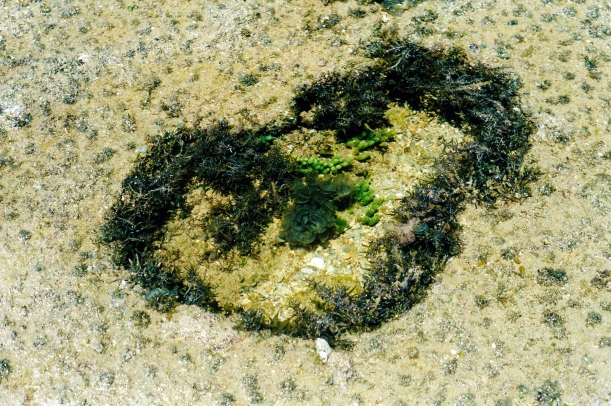 09-07-2000 reef rock pool with greenery.jpg