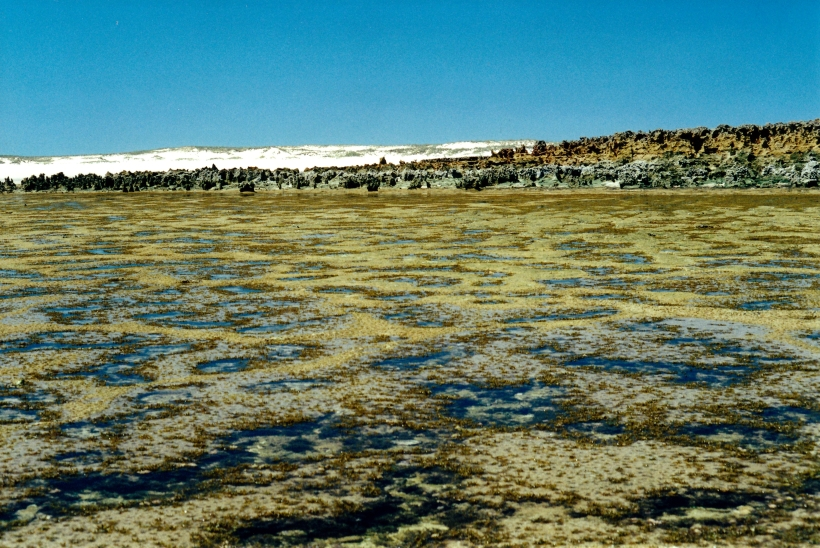 09-07-2000 reef with limestone rocks.jpg