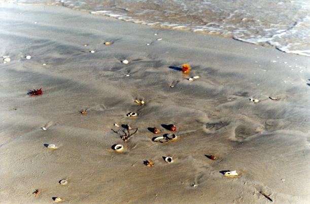 09-11-2000 beach collection.jpg